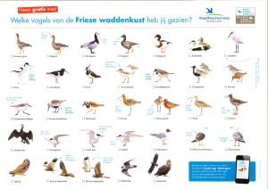 De kaart om de Wadvogels te herkennen